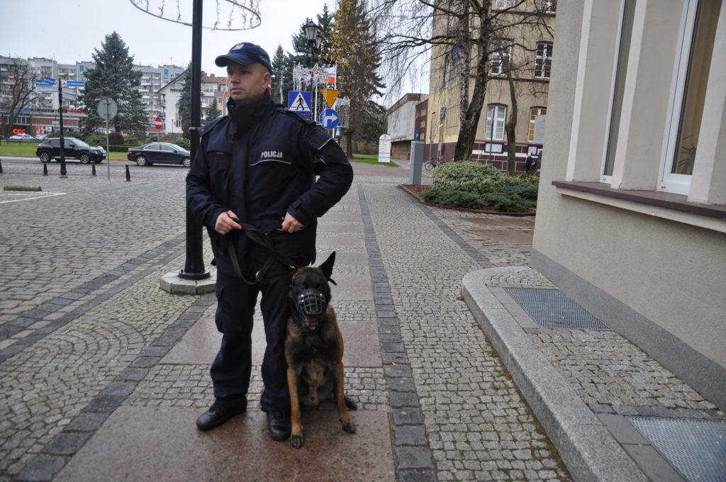 219 19668 1024x680 - Oto Macher, wraz z trzema innymi owczarkami służy w kołobrzeskiej policji. Zmiany prawa mają im zapewnić państwową emeryturę