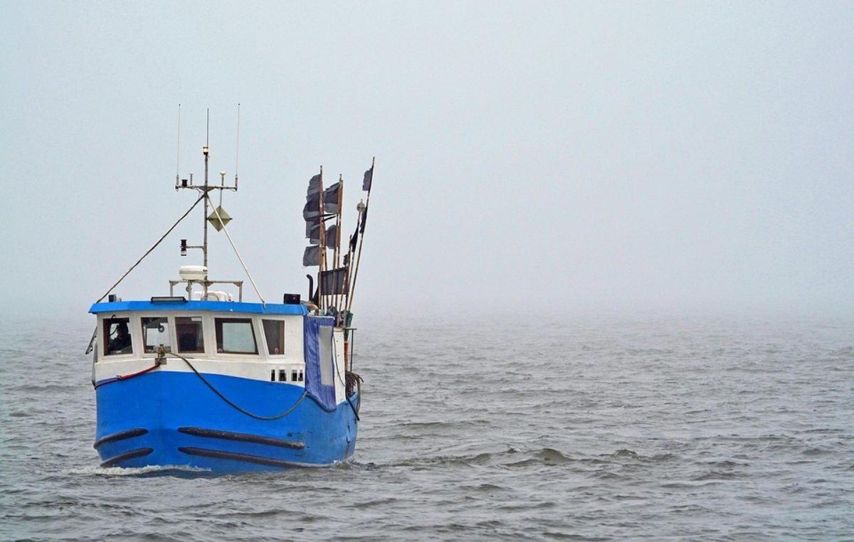 WWF alarmuje: Stada ryb są w krytycznym stanie. Limit połowowy dla dorsza w 2020 roku powinien wynieść zero ton