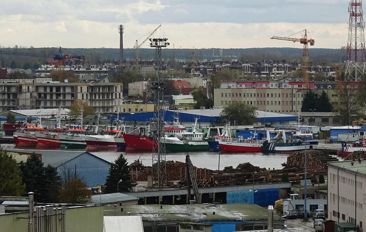 Wbrew opiniom ekologów zwiększono kwoty połowowe dla zachodniego dorsza bałtyckiego