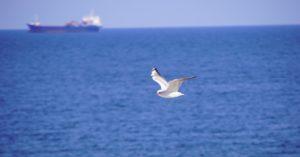 Komisja Europejska: sprawa oczyszczenia Bałtyku z zalegającej na dnie broni chemicznej ma trafić do planu na rzecz zerowego zanieczyszczenia