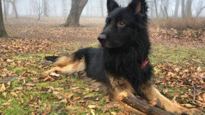 """""""Bo"""" to pies piękny i kontaktowy. Szuka domu"""