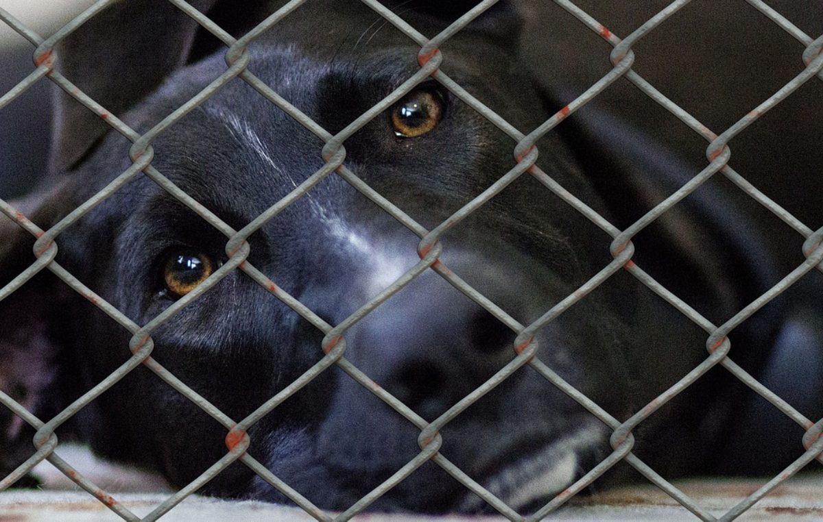 Rada Miasta zgodziła się na lokalizację schroniska dla zwierząt. W nowym przytulisku będzie mniej zwierząt