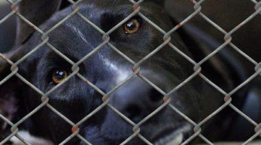 Kilka osób wycofało swoje poparcie dla protestu przeciwko schronisku dla zwierząt w Korzyścienku. Zostali wprowadzeni w błąd?