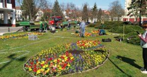 Miasto powołało ogrodnika miejskiego. Szykuje się wielki powrót róż