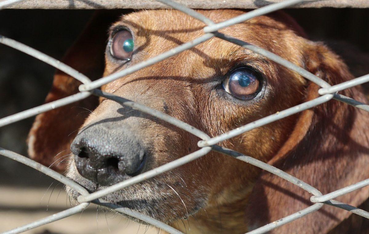 Wpłynęła tylko jedna oferta na prowadzenie schroniska dla zwierząt. Została odrzucona