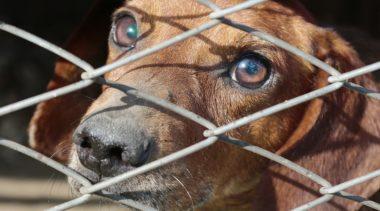 Stara umowa na prowadzenie schroniska dla zwierząt wygasła, a nowej wciąż nie ma. Kto teraz dba o bezdomne czworonogi?