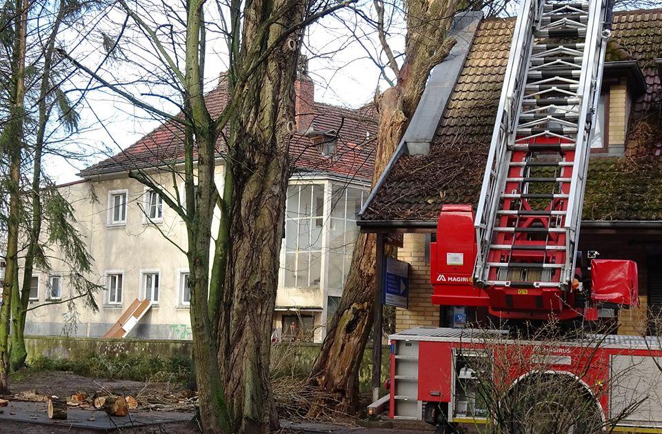 drzewa 4 - Trwa trudne i niebezpieczne usuwanie topoli, która oparła się o pawilon przy ul. Dworcowej (zdjęcia)