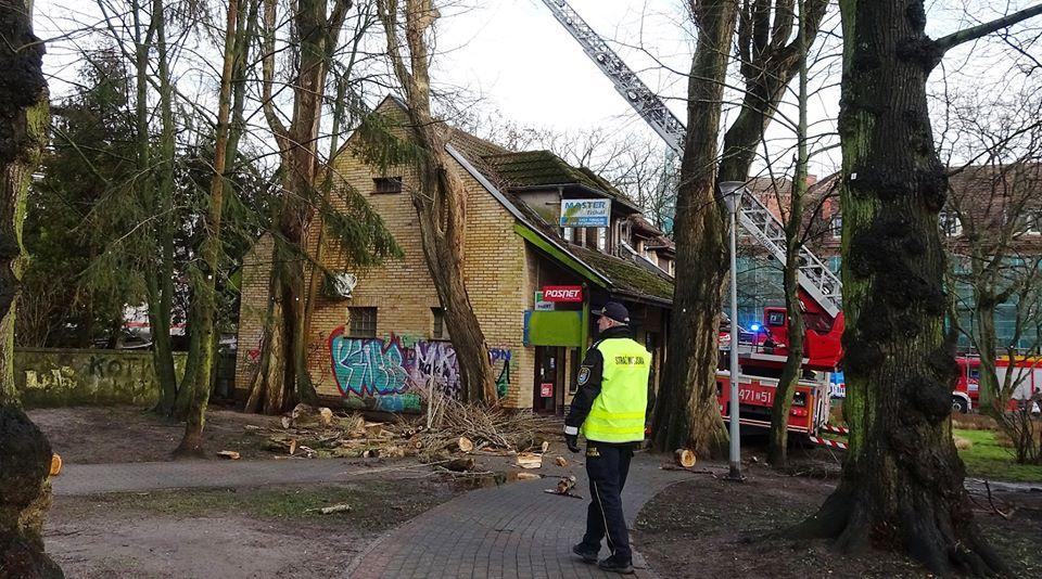 drzewa7 - Trwa trudne i niebezpieczne usuwanie topoli, która oparła się o pawilon przy ul. Dworcowej (zdjęcia)