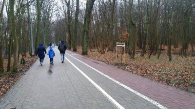 Green Carpet ze Szczecina zinwentaryzuje drzewa kolidujące z przebudową promenady. Kiedy może ruszyć sama przebudowa?