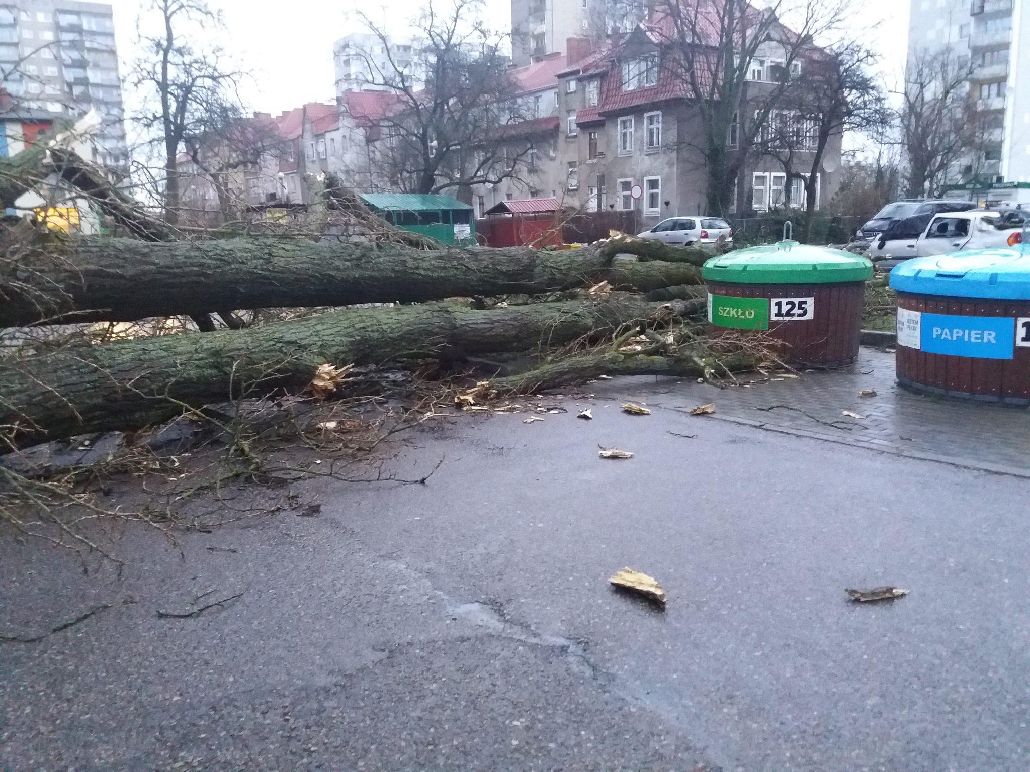 sabina5 2 - 46 interwencji Straży Pożarnej. Przy ul. Zygmuntowskiej drzewo spadło na samochody