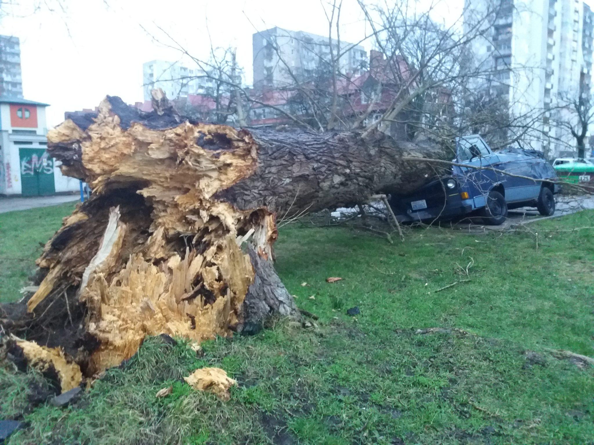 sabina6 - 46 interwencji Straży Pożarnej. Przy ul. Zygmuntowskiej drzewo spadło na samochody