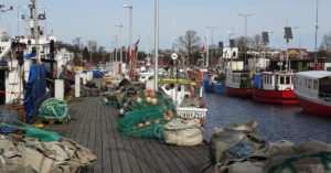 Zakaz połowu dorsza na wschodnim Bałtyku będzie też obowiązywał w 2021 r. Ekolodzy: to za mało