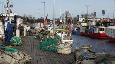 Z dorszem dalej nie jest najlepiej. Komisja Europejska proponuje więc zmniejszenie kwot połowowych