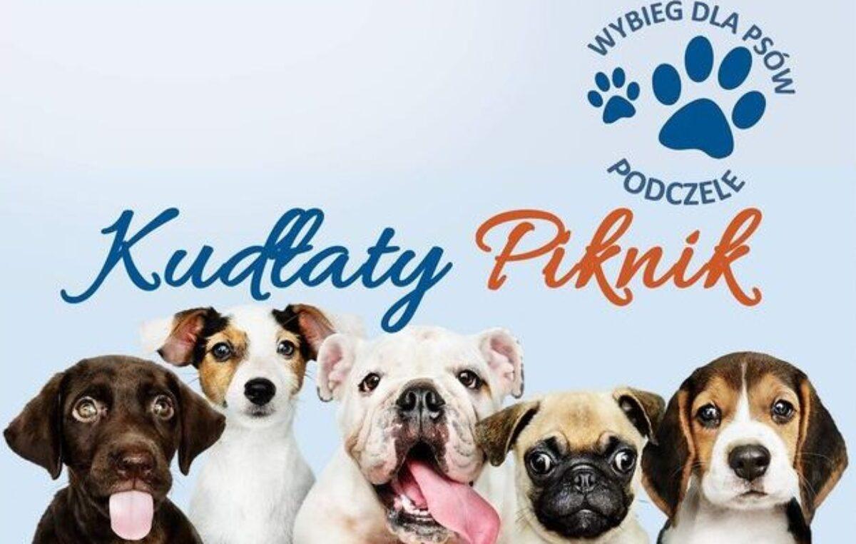 Sympatyczne: Kudłaty Piknik na osiedlu Podczele