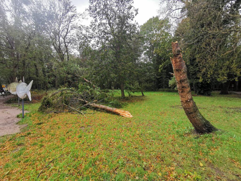 drzewo2 1024x768 - W taką pogodę drzewa łamią się jak zapałki (ZDJĘCIA)
