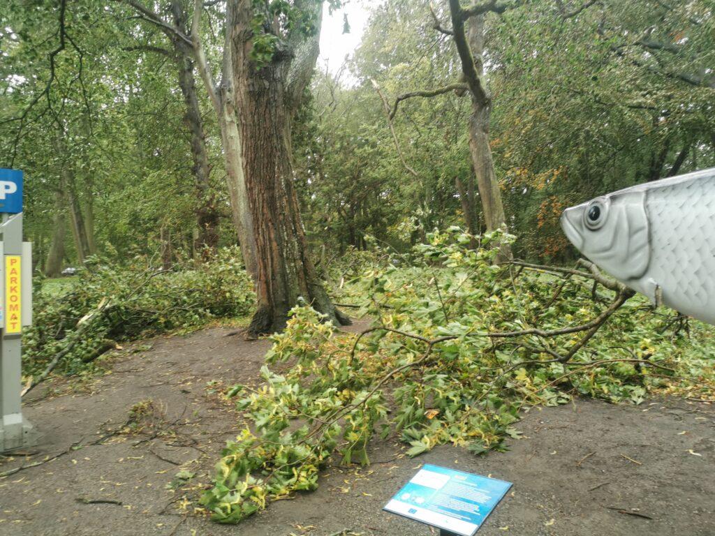 drzewo4 1024x768 - W taką pogodę drzewa łamią się jak zapałki (ZDJĘCIA)