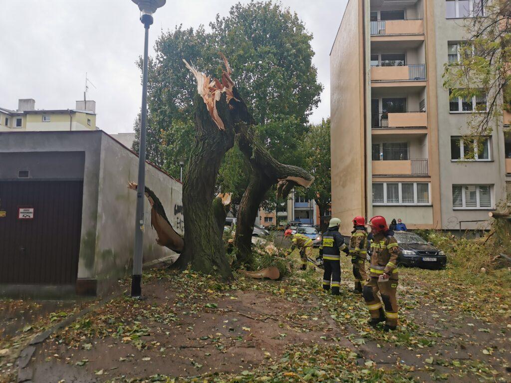 straż 1024x768 - Duże drzewo złamało się pod naporem silnego wiatru. Upadając uszkodziło cztery parkujące obok samochody (ZDJĘCIA)
