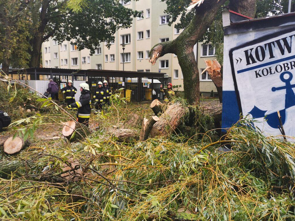 straż pożarna 2 2 1024x768 - Duże drzewo złamało się pod naporem silnego wiatru. Upadając uszkodziło cztery parkujące obok samochody (ZDJĘCIA)