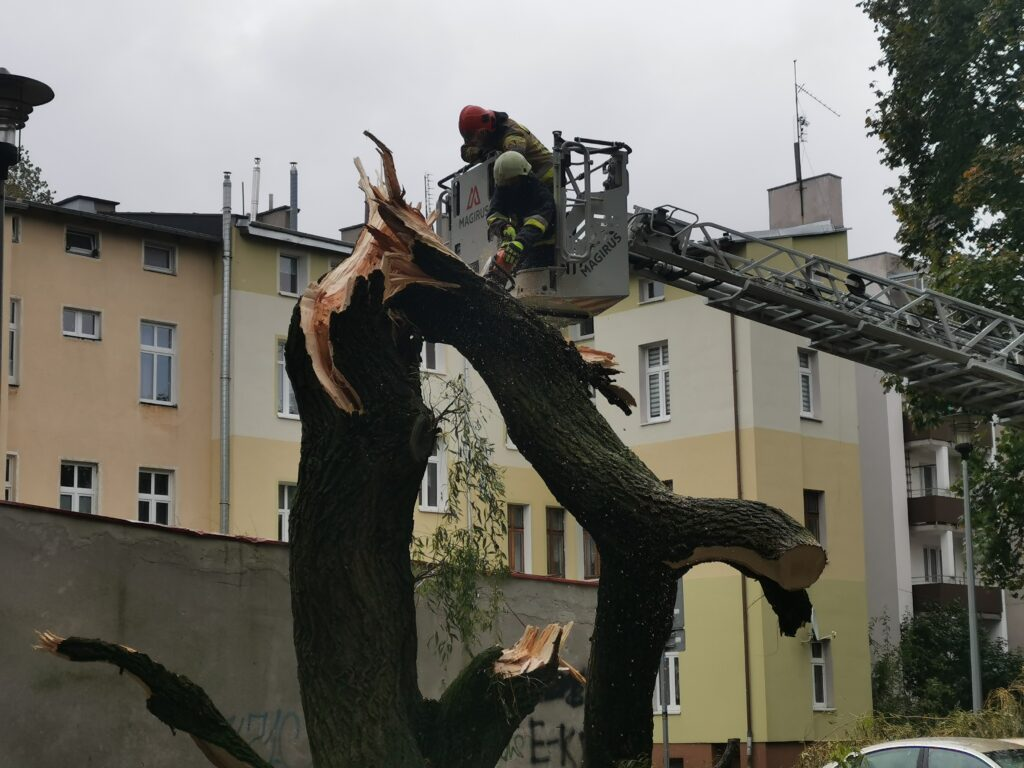 straz pozarna 5 1 1024x768 - Duże drzewo złamało się pod naporem silnego wiatru. Upadając uszkodziło cztery parkujące obok samochody (ZDJĘCIA)