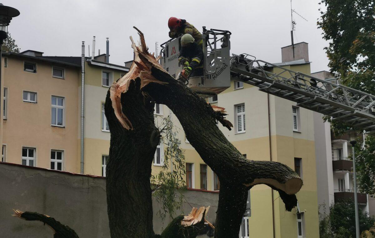 W taką pogodę drzewa łamią się jak zapałki (ZDJĘCIA)