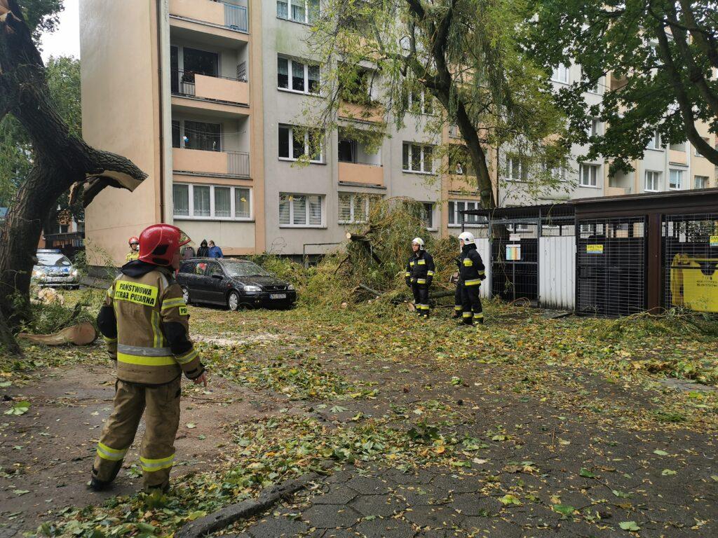 straz pozarna 5 2 1024x768 - Duże drzewo złamało się pod naporem silnego wiatru. Upadając uszkodziło cztery parkujące obok samochody (ZDJĘCIA)