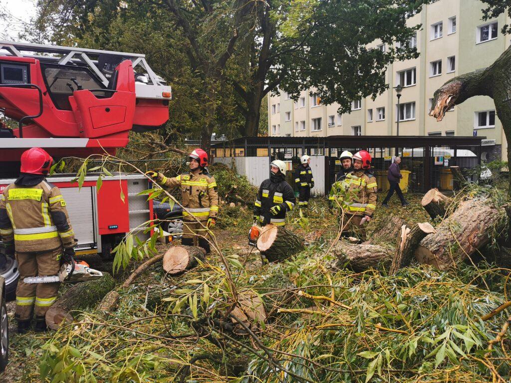 straz pozarna 8 1 1024x768 - Duże drzewo złamało się pod naporem silnego wiatru. Upadając uszkodziło cztery parkujące obok samochody (ZDJĘCIA)