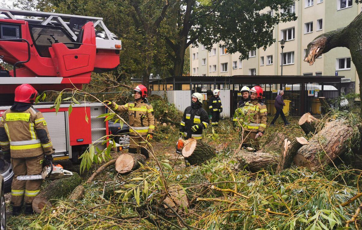 Duże drzewo złamało się pod naporem silnego wiatru. Upadając uszkodziło cztery parkujące obok samochody (ZDJĘCIA)