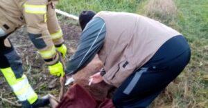 Strażacy uratowali jelenia. Zwierzę zaplatało się porożem w ogrodzenie
