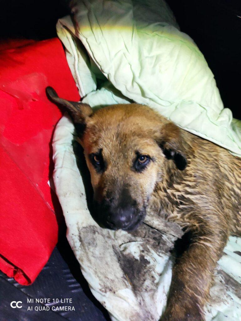 pies2 769x1024 - Policjanci uratowali szczeniaka. Utknął w rowie, z którego nie umiał się wydostać