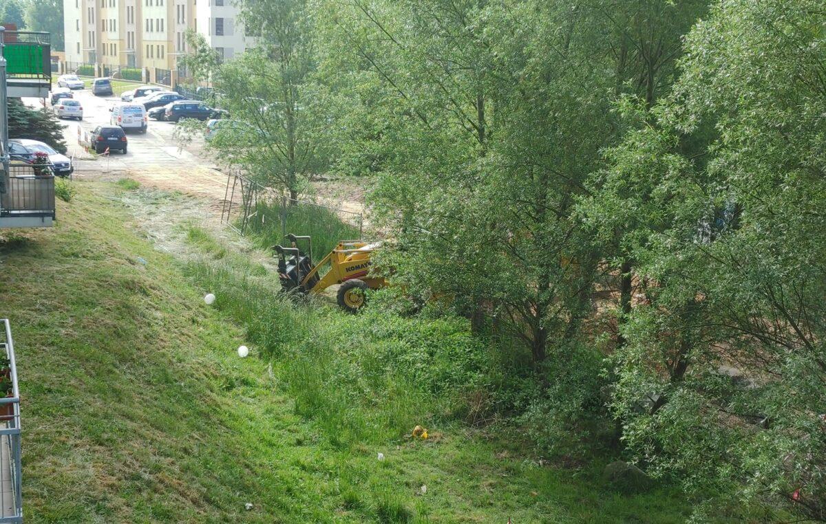 Interwencja w ostatniej chwili, a potem poruszający wpis na Facebooku o drzewach, które na razie uniknęły wycinki
