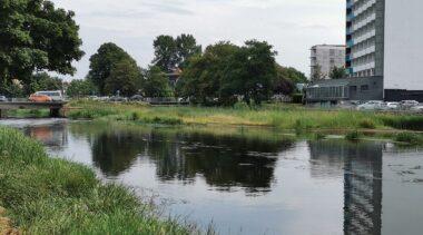 Czy Parsęta zarasta? Łacha na rzece coraz większa, ale teraz to już nie jest zwykła mielizna tylko… siedlisko przyrodnicze