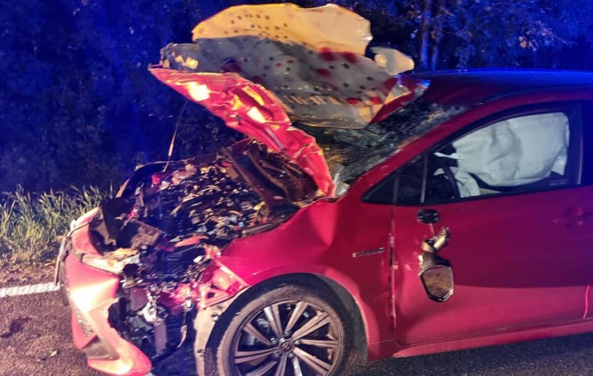 Nocne zderzenie z łosiem na drodze krajowej nr 11